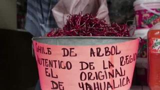 Chile de árbol da identidad y sustento en Yahualica