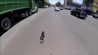 La increíble carrera de una ciclista por salvar a un perrito