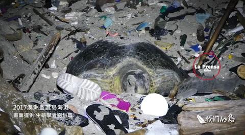Las tristes imágenes de una tortuga anindando enmedio de toneladas de basura