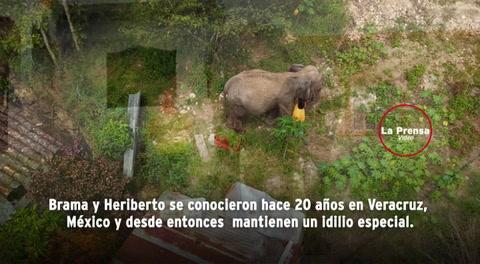 Ley deja atrapada a elefanta en Gracias