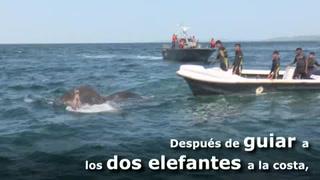 Rescatan a dos elefantes en aguas profundas