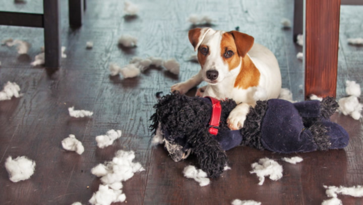 6 Ways to Keep Your Precious Pets From Making a Mess of Your Home Sale