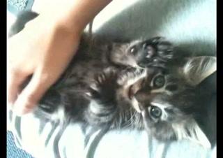 Happy Kitten Playtime Part 3 (Kitten Tv)