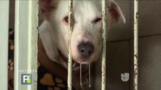 Hallan perros mutilados que habrían sido utilizados en rituales