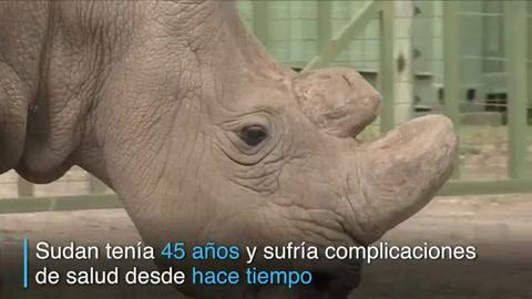 Muere último rinoceronte blanco macho