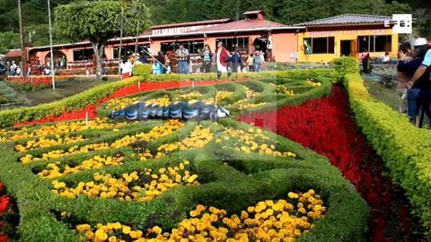 Millones de flores se toman Boquete, un pequeño poblado de las tierras altas de Panamá
