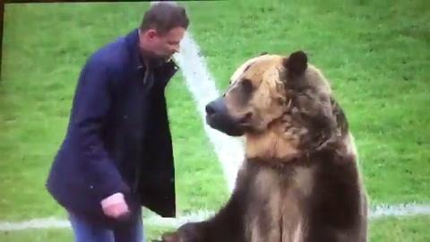 Oso hace el saque de honor en un partido de la tercera división de Rusia