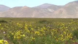 El lugar más árido del mundo se viste de flores