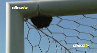 Curioso: Nido de abejas retrasó el calentamiento de Motagua