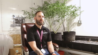 Cigar for Marijuana: Meet the Primo Cannagar