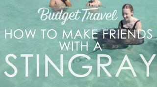 How to Make Friends With a Stingray