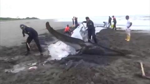 Ballena muere tras encallar en playa colombiana