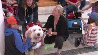'Terapeutas' de cuatro patas ayudan a viajeros