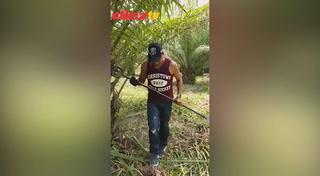 El futbolista del Honduras Progreso, Mariano Acevedo, disfruta de las vacaciones trabajando en el campo.