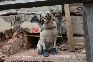 Frida, la perra rescatista que encantó en redes