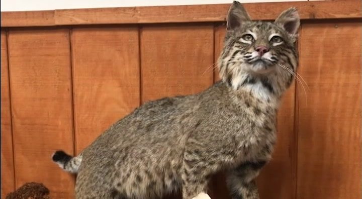 Taxidermist shares why he does this