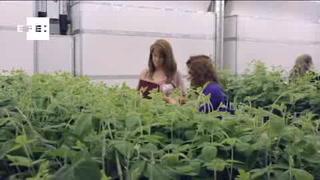 Bayer compra Monsanto por 66 mil MDD