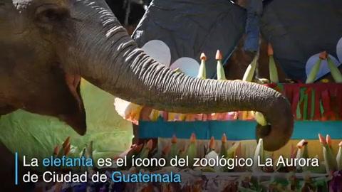 Elefanta Trompita celebra 57 años en Guatemala