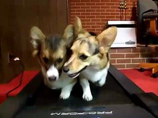 Twins On A Treadmill