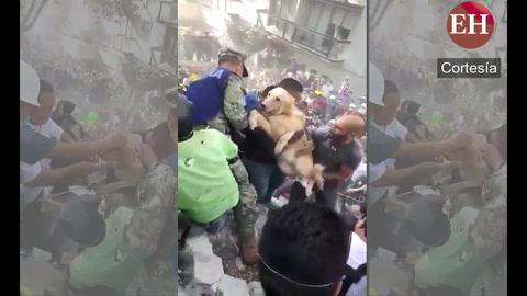 Perrito es rescatado de los escombros tras el terremoto en México