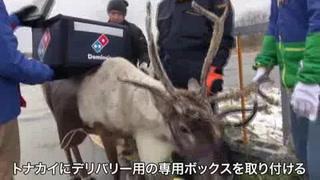 Renos, próximos repartidores de pizzas en Japón