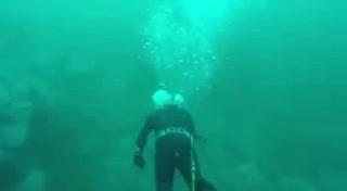 Un tiburón blanco casi le arranca la cabeza a un buceador