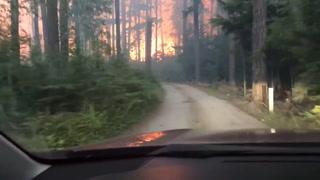 Padre e hijo tratan de escapar de un voraz incendio forestal