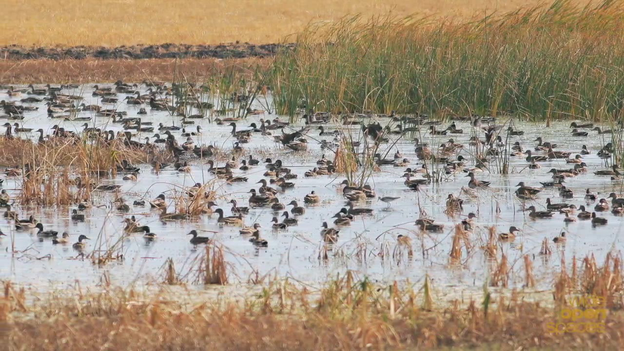 duck hunting in nd