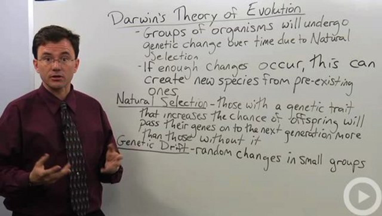 the theory of evolution essay example