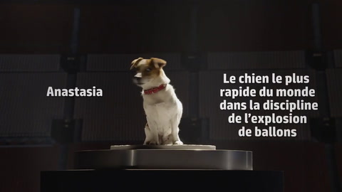 Dog vs. Machine - HP Officejet Pro X (French)