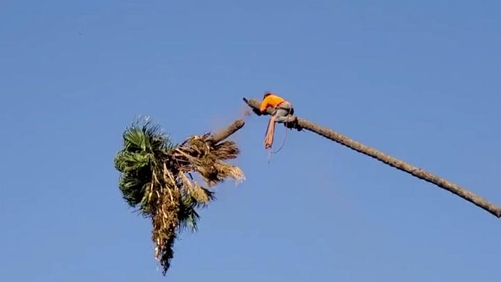 Image: Sager av palmetoppen - fyker avgårde