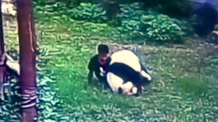 Mann havnet i brytekamp med panda