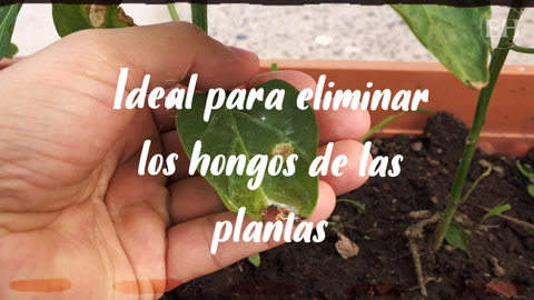 Elabora en sencillos pasos un fungicida casero para tu jardín