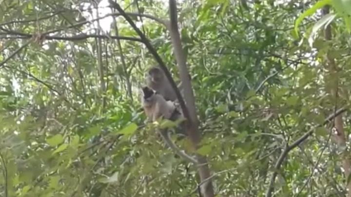 Wild monkey 'kidnaps' puppy for three days until dramatic rescue