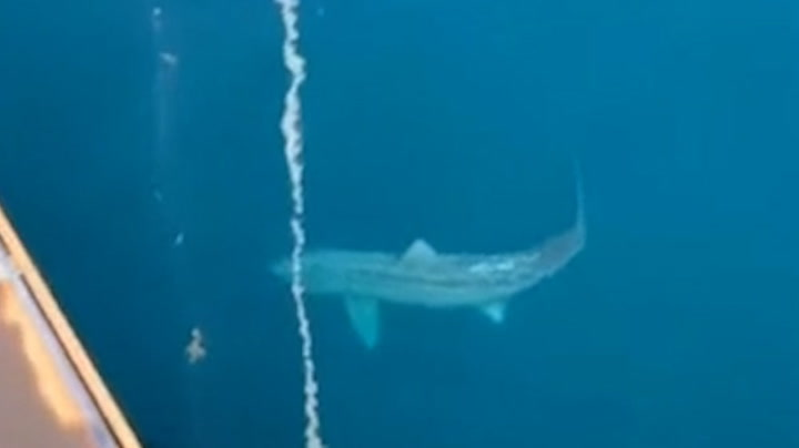 Unbelievably large shark circles tourist ship in the Atlantic