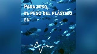 EL HERALDO en busca de soluciones a problemas ambientales