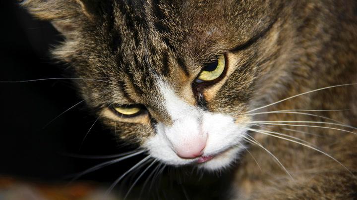 7 grunner til at katter er drittsekker