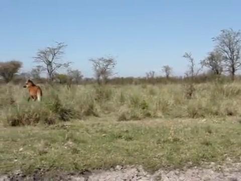 Emocionante liberación de animales en una reserva al norte de Santa Fe