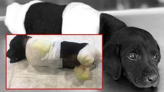 Kappet av valpens bein og etterlot den for å dø
