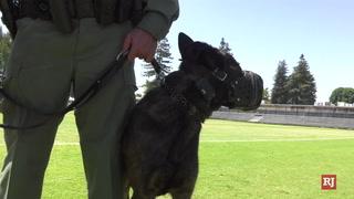 Raider The Dog – Video