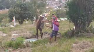 Dantesco hallazgo de destazadero en sector de la capital de Honduras
