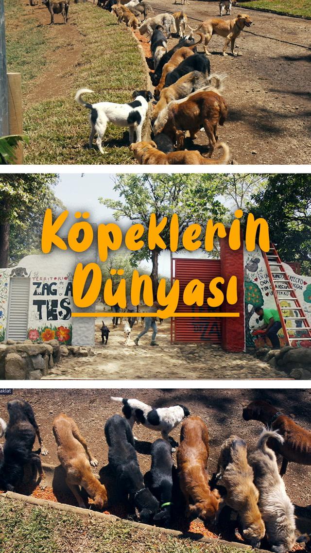 Bu kasabada köpeklerin sözü geçer