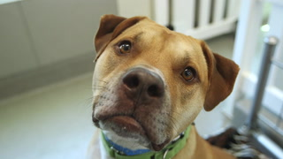 Animal Foundation takes in huge number of dogs and cats – VIDEO