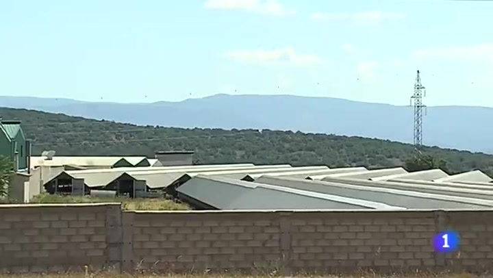 Sacrifican a 92.700 visones de una granja para prevenir el coronavirus
