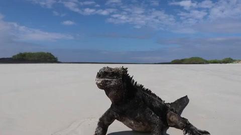 Galápagos reabre sitios turísticos y reserva marina, cerrados por la pandemia