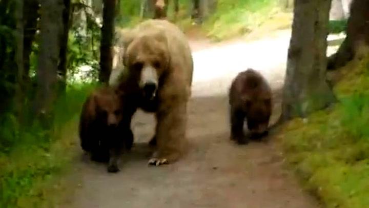 Innpåsliten bjørnefamilie forfulgte turist