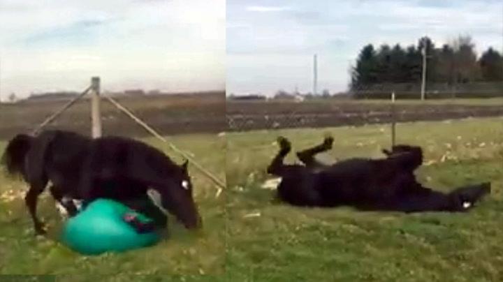 Denne hesten elsker yoga
