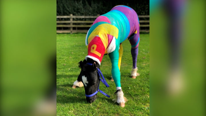 Baby horse dressed in colourful bandages after 'barbaric' fire attack