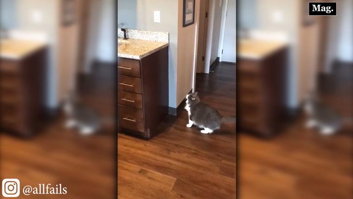Viral: gatito intenta saltar sin éxito sobre lavadero