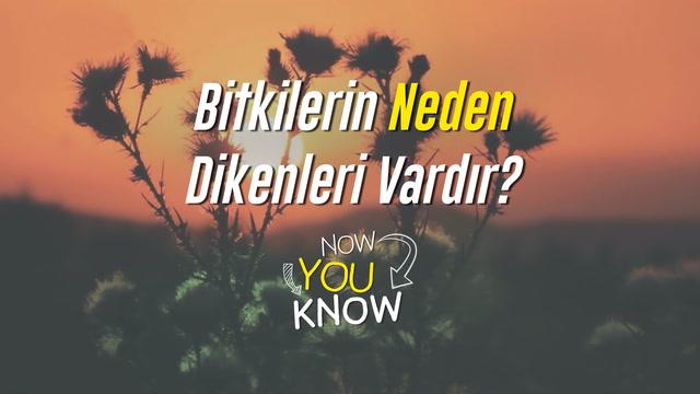Now You Know - Bitkilerin neden dikenleri vardır?